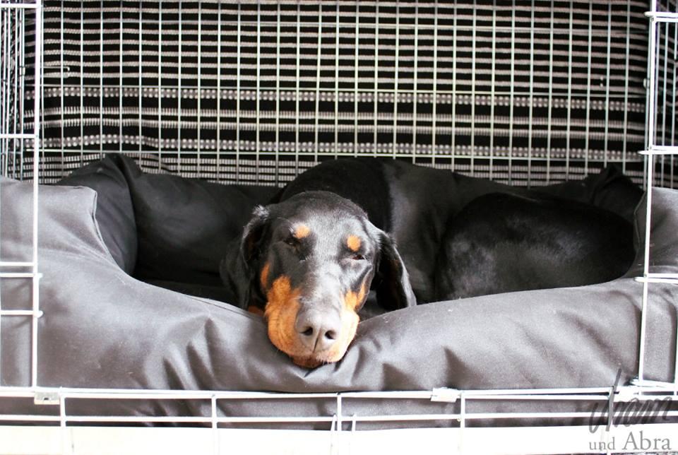 Hundebox7