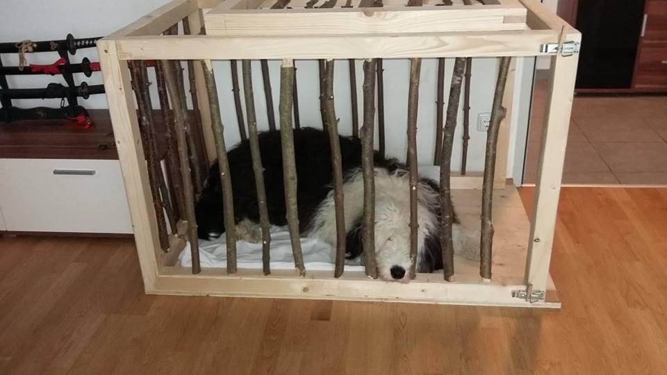 Hundebox10